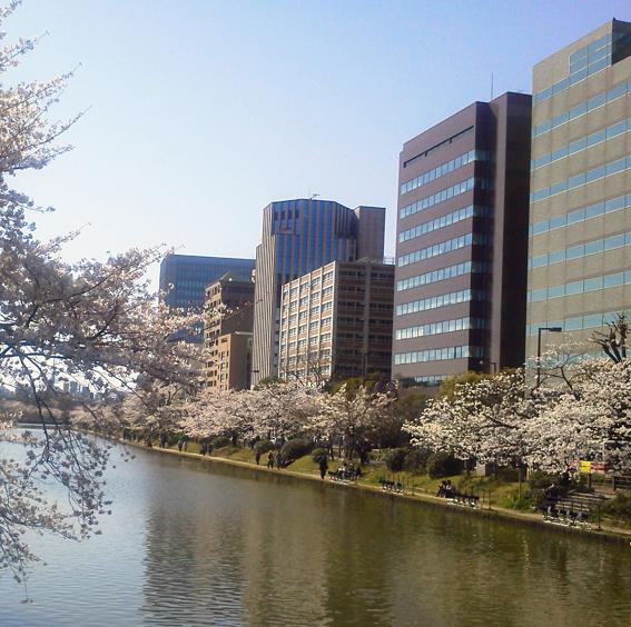 ビルとお堀と桜.jpg