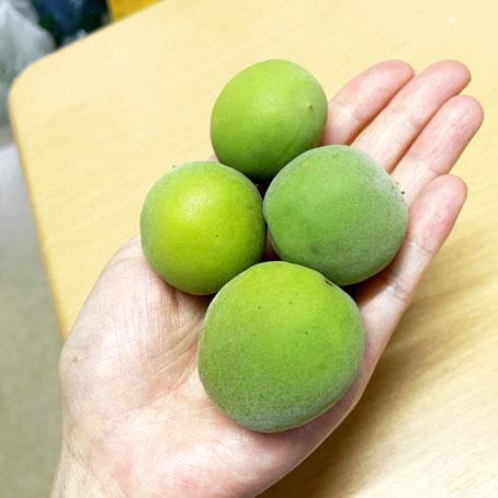 梅しごと3粒.jpg