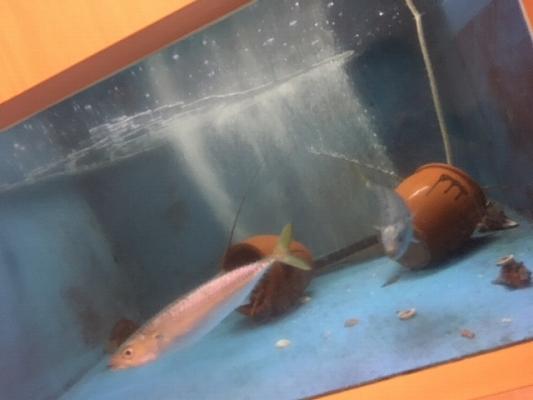 魚20180426.jpg