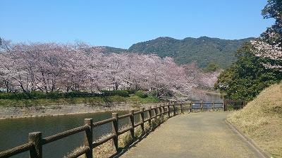 20150401桜1.jpg