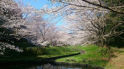 20150401桜2.jpg