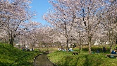 20150401桜3.jpg