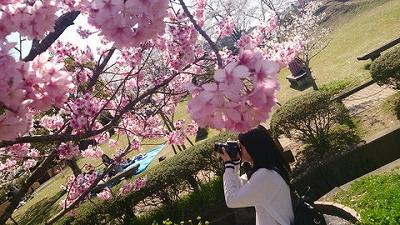 20150401桜4.jpg