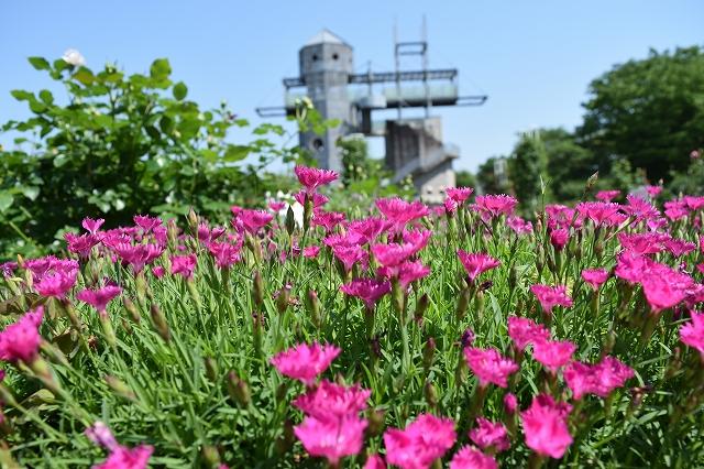 20180601_花と塔.jpg