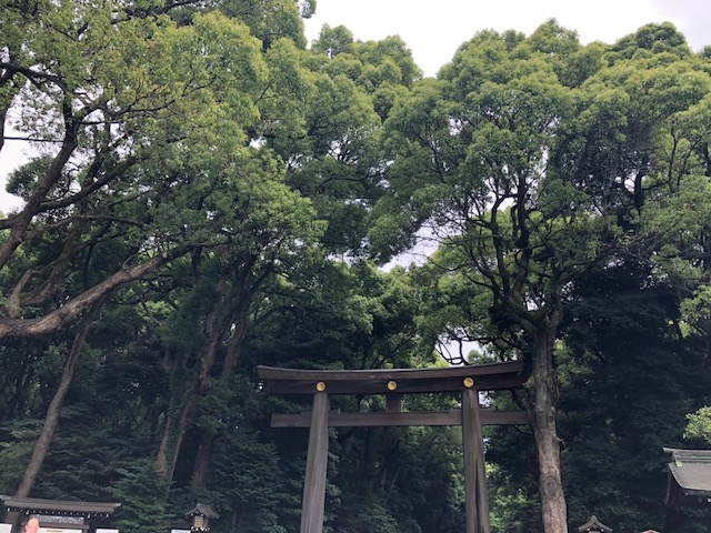 IMG_0591明治神宮 鳥居1.JPG